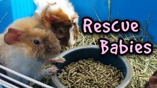 Rescue Babies