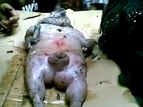 Warga Bekasi Heboh Pasca Tertangkapnya Babi Ngepet