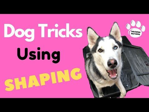 Learn How To Teach The Coolest Dog Tricks Using Shaping - Professional Dog Training Tips