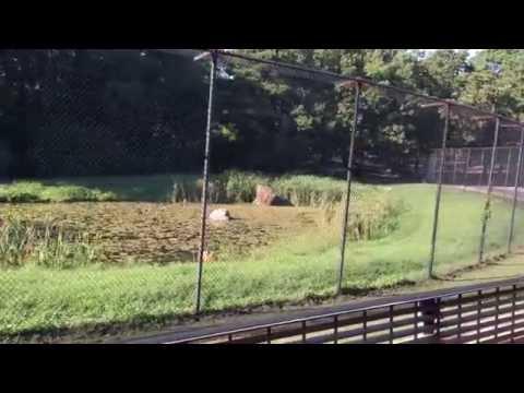 Six Flags Great Adventure & Safari Off Road 2 (4K) Safari - 08/24/2016