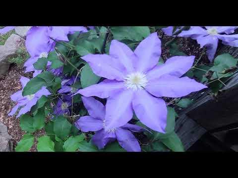 Primavera, lindas flores en las montañas con canción