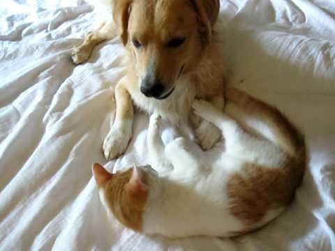 Katze und Hund beim wilden Spiel - lustig und s