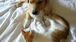 Katze und Hund beim wilden Spiel - lustig und süß!