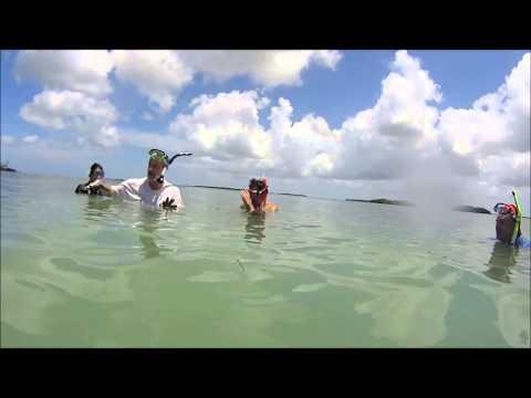Marine Field Ecology: Polychaete Class
