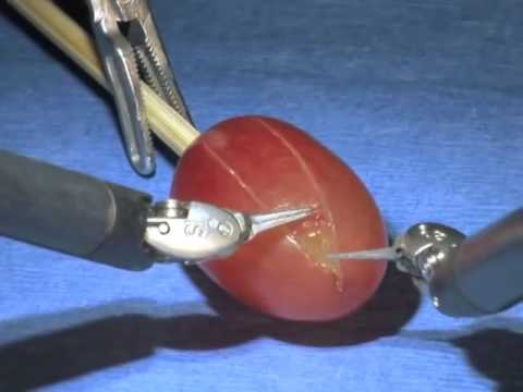 daVinci Surgical System - Surgery on a grape