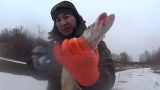 видео Зимой за налимом