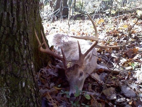 North Carolina Public Land Muzzleloader Deer Hunt