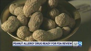 Peanut allergy breakthrough: Drug ready for FDA review