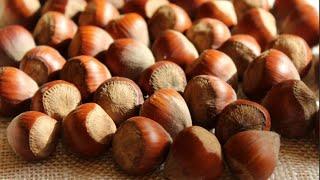 Фундук Лещина Интересные факты об орехе
