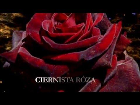 ciernista roza