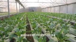 香港水耕種植集團 Hong Kong Hydroponics Plantation Group Ltd.