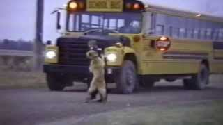 Dogs Who Don't Want Their Kid to Go Back to School