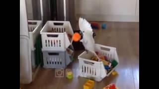 Попугай один дома