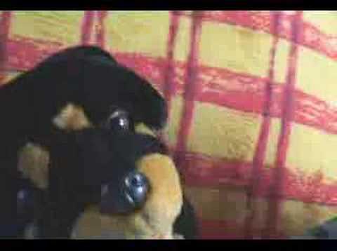 31 Minutos - Mario Hugo - Doggy Style