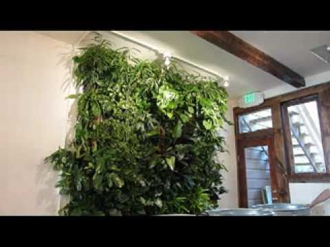 Living Wall Kit Installation