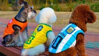 Футболки для кошек и собак / jerseys for cats and dogs с AliExpress