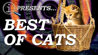 QI Compilation | Best Of Cats