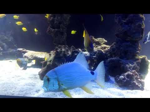 Аквариум в Монте-Карло, Монако, Франция, Aquarium in Monte Carlo, Monaco, France