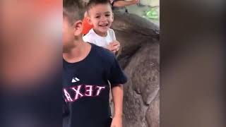 Top 10 Funny Animals Trolling Babies and Kids #12 | Funny Babies and Pets