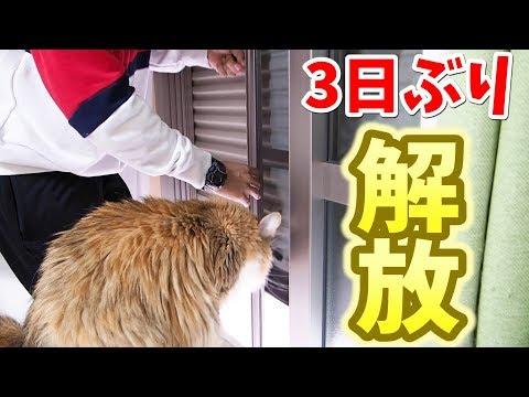 3日ぶりに雨戸を開けた時の猫の反応がすごい!