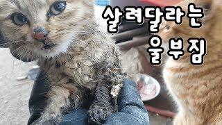 영하-15에서 살려달라는 새끼고양이  극적으로...