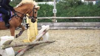 3 Girls 1 Amazing pony!