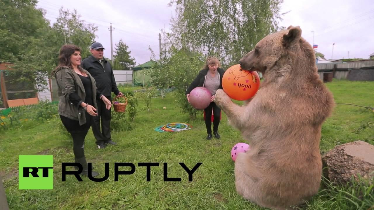 دب عملاق يعيش بين أفراد عائلة روسية
