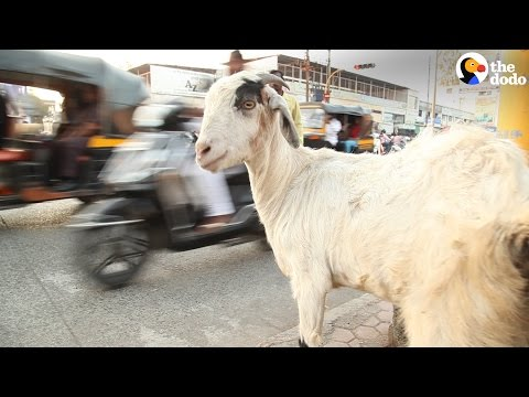 New Technology Protect Animals From Car Crashes In India | The Dodo