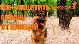 Как защитить собаку от клещей. Проверенное средство.(Данной средство мне порекомендовали в кинологическом центре МВД, они сами регулярно опырскивают им служеб..., 2015-07-05T12:46:18.000Z)
