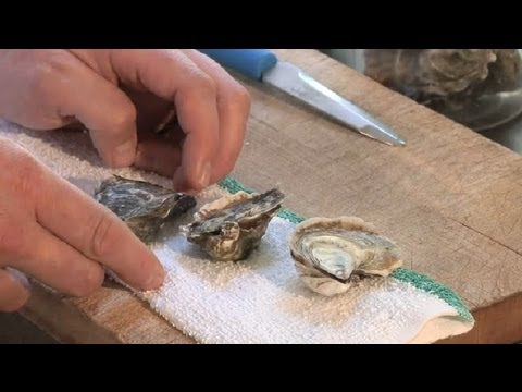 How to Refrigerate Oysters : Gourmet Recipes