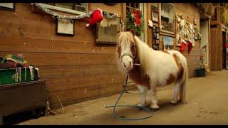 Mini Horse Big Wish