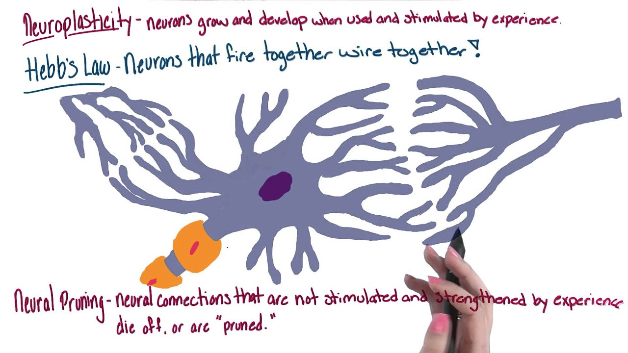 neuroplasticity psychology