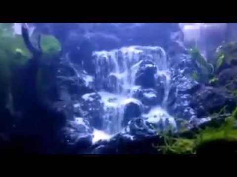 Tren Air Terjun Unik Dalam Aquarium Aquascape Terbaik No 1 Di