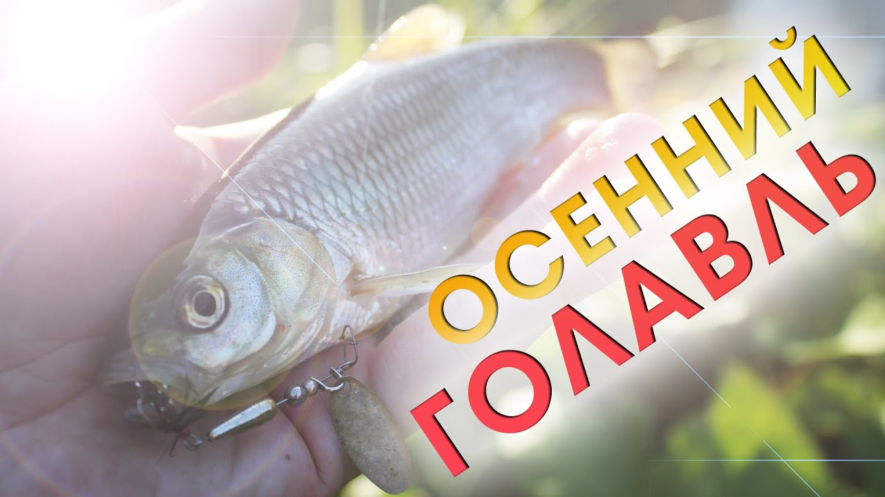 Ловля голавля на спиннинг ультралайт / рыбалка осенью 2020