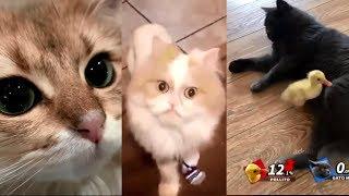 Original Animals #21. CUTE AND FUNNY ANIMALS VIDEO/ МИЛЫЕ И СМЕШНЫЕ ЖИВОТНЫЕ.