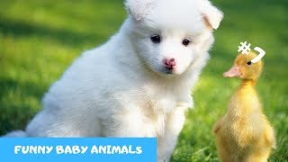 Adorable baby animals Videos Compilation cute moment of the animals PART 7