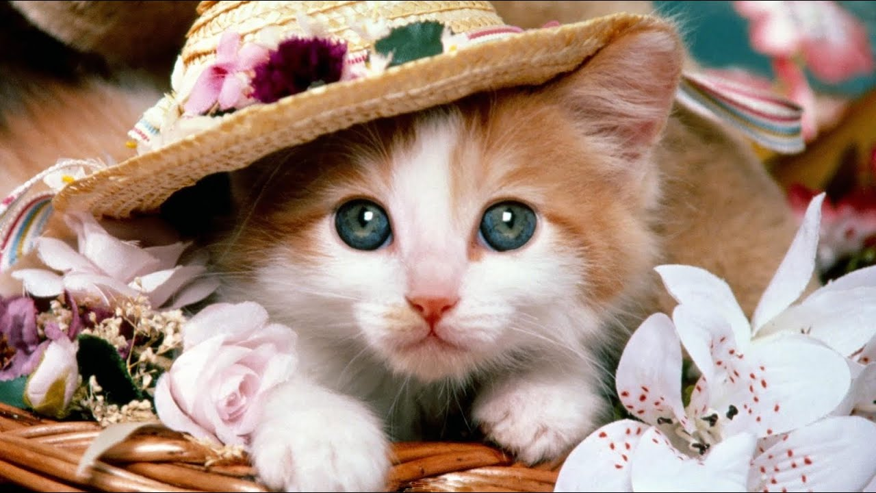 Cute Cat Profile Pictures For Facebook Youtube