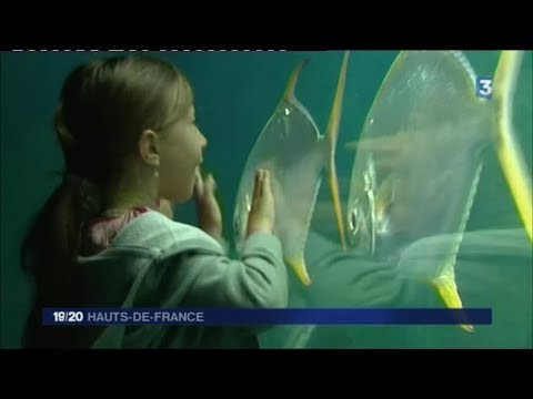 Nausicaa, bientôt le plus grand aquarium d'Europe