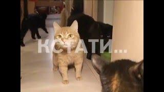 Зоозащитники заявляют о массовом убийстве кошек на заводе.