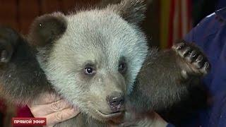 Медвежатам-подкидышам из Екатеринбургского цирка дали имена