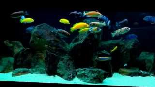New Camera Wow! Mbuna Aquarium - Panasonic V510