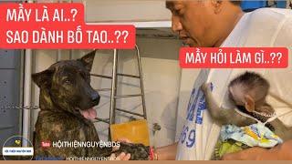 Cấm Cười | 8 Sang Chơi Ác Với Bà Mai | Xì Chó Cắn Bà Mai Sợ Rung Như Con Gà Tiềm Thuốc Bắc