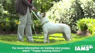 How To Leash Train A Puppy: Iams® Puppy Training