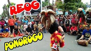 BLUDAK, Aksi Barongan / Kucingan Reog Ponorogo Menyedot Pengunjung CFD - Melihat Atraksi Reog
