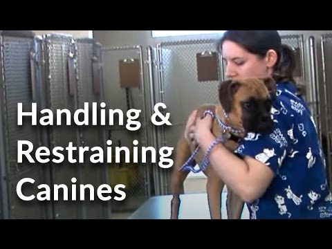 Veterinary Technician And Assistant Training: Handling And Restraining Dogs