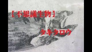 【不思議生物】    タキタロウ