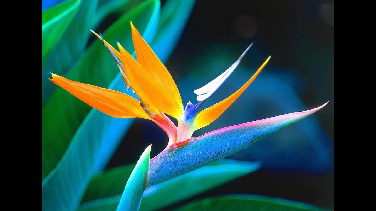 Самые необычное красивые цветы мира фото