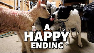 7 DAYS OF LAMBING: DAY FIVE (4TH Cut Hay, A Couple Sad Losses, BUT ONE BIG WIN!) Vlog 351
