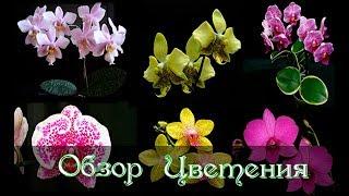 Обзор цветения Орхидей на  лоджии №2