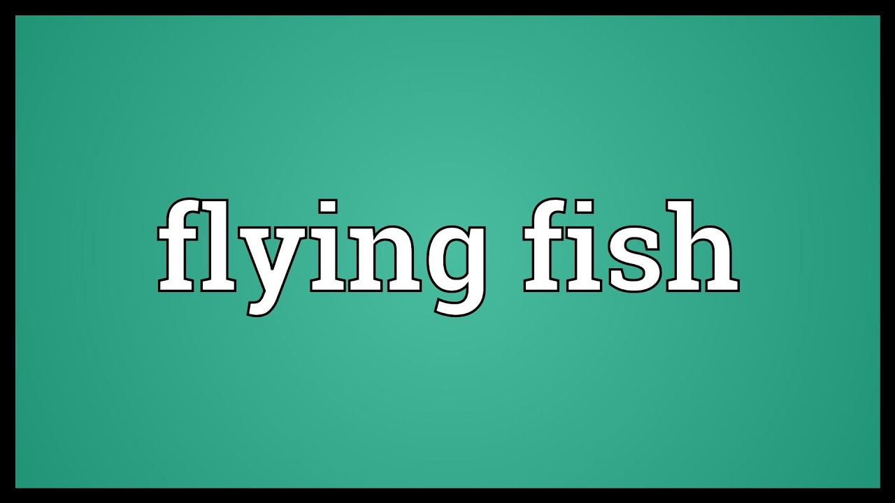 Flying Fish Meaning Youtube